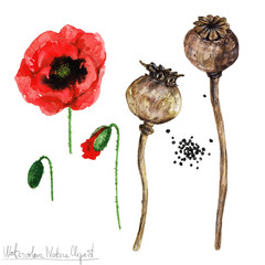 Poster Waterverf Illustraties Watercolor Nature Clipart - Poppy