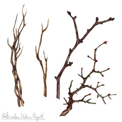 Watercolor Nature Clipart - Twigs