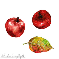 Watercolor Nature Clipart - Red Apple
