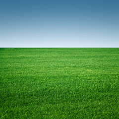 grass field minimalistic