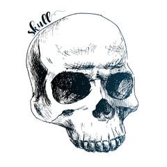Nice human skull