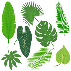 Tropical plant leaves vector collection.