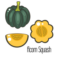 Acorn squash cartoon vector illustration. Green pumpkin whole vegetable and slice.