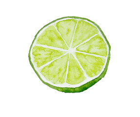 Half of lime. Watercolor illustration. Drawn by hand.