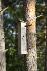 Apartment house for birds on a pine tree. The bird house is a skyscraper, three stores high.