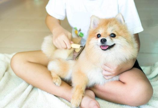 Brushing her Pomeranian dog