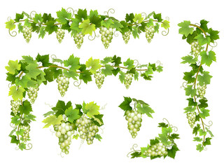 Set of bunches of white grapes. Cluster of berries, branches and leaves. Vector illustration about harvest and wine making. Fototapete