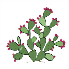 Prickly pear plant with fruits. Vector illustration