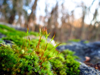 Close up view of a moss