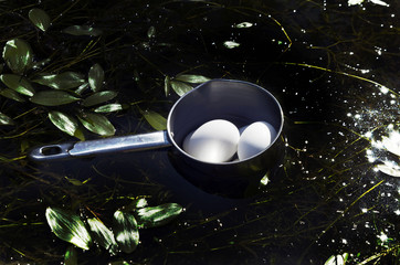 White boiled hen eggs cooling in a lake in a camp