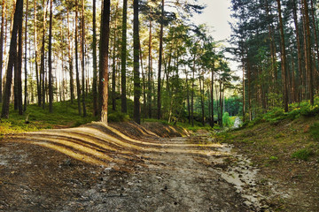 empty road in the evening pine forest with the last rays of the sun in the tourist area Machuv kraj in czech landscape