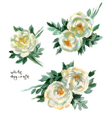 white dog rose hand drawn flowers, watercolor, white wild rose, hand-drawn watercolor, white background