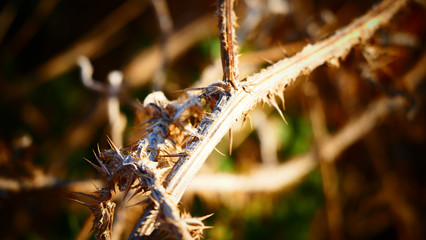 Thorny branches