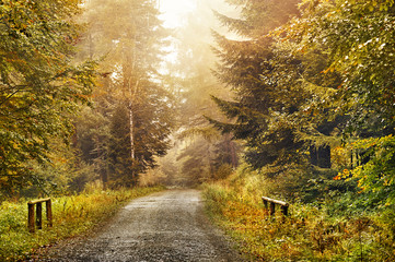 Magic dark forest. Autumn forest scenery with rays of warm light