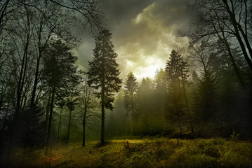 Foto op Canvas Bos Magic dark forest. Autumn forest scenery with rays of warm light