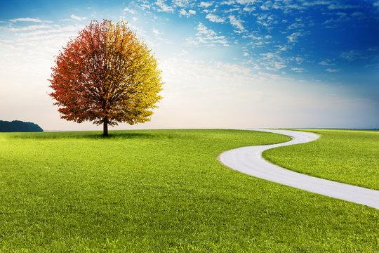 Weg durch Landschaft