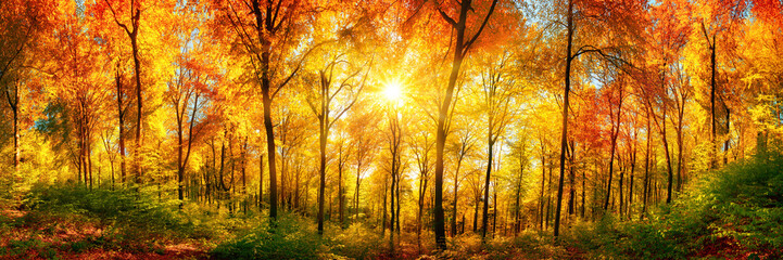 Wall Mural - Wald Panorama mit Sonne an einem schönen Tag im Herbst