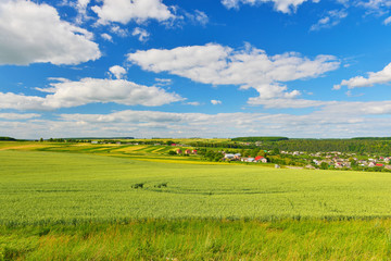 In de dag Lime groen Field of green wheat in summer countryside