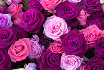 Different colors of roses on the flower show