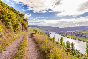 view on Moselle and vineyards  in Germany Piesport