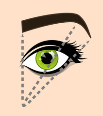 The scheme of ideal proportions eyebrows and eyes. Tutorial how to shape the eyebrow on face. Manual for shaping the eyebrows. Vector illustration
