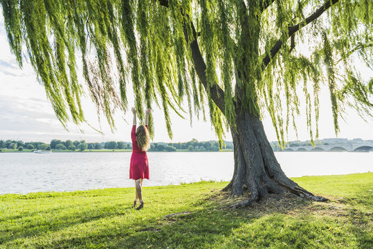 Woman with long hair in red dress reaching to willow tree and wind by Potomac River and Arlington Memorial bridge in Washington DC