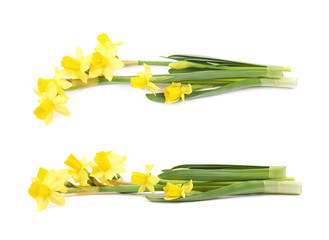 Door stickers Narcissus Yellow narcissus flower isolated