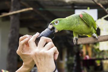 parrot bite