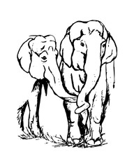 two lovers elephant