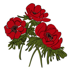 Red flower of anemone isolated