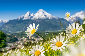 Fototapete - Beautiful blooming flowers with snow-capped mountain tops in the Alps in spring