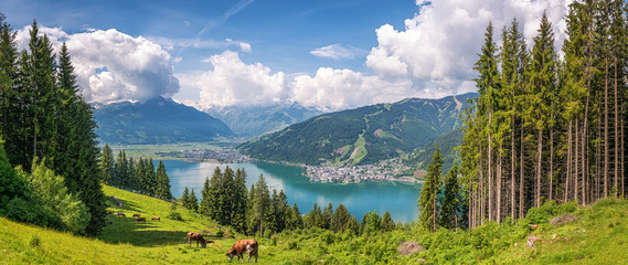 Wall Mural - Idyllic alpine landscape with cows grazing and famous Zeller Lake