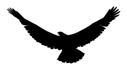 Silhouette eines Adlers