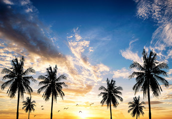 Coconut seaside landscape in the sunset (sunrise)