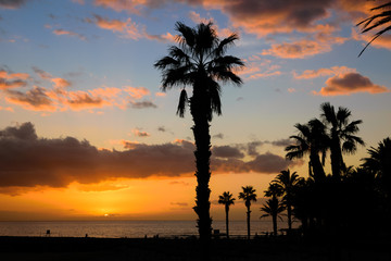 Tropical sunset with trees silhouette in Tenerife