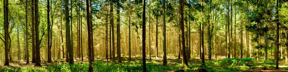 Wald Panorama bei Sonnenschein