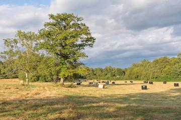 ballots de paille dans le champ