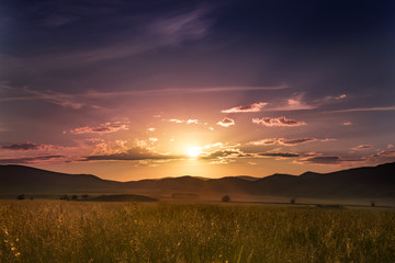 gold summer grass against the background of colourful sunset