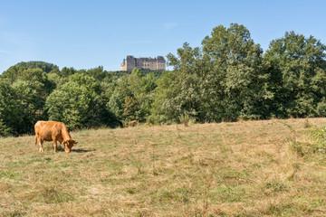 vaches en pâture et château de Hautefort
