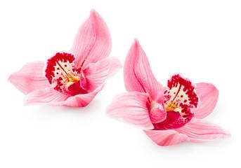 Foto auf Acrylglas Orchideen Orchid flowers