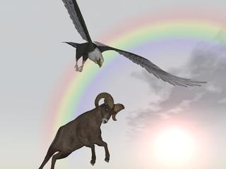 Seeadler attackiert Dickhornschaf