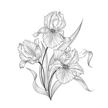 Floral bouquet with flower iris. Vintage Fourish Greeting Card Design. Swirl flower posy isolated over white background