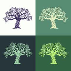 Hand drawn graphic olive trees set on different backgrounds. Vector illustration for labels, packs, logo design.