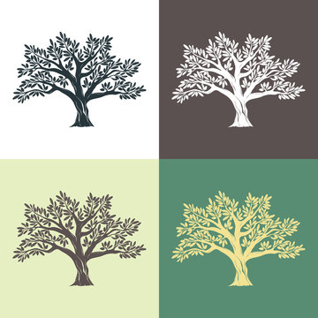 Hand drawn graphic argan trees set on different backgrounds. Vector illustration for labels, packs, logo design.