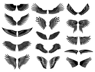 Wings of real birds in nature. Vector collection symmetric wings.