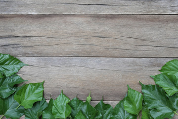 Green leaf of Mulberry placed on the wooden background.