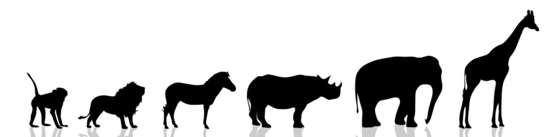 Vector illustration wild animals.