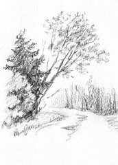 Forest. Birch and spruce. Pencil sketch on paper. Drawn by hand. For the interior decoration, greeting card.