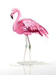 Vector illustration of pink flamingos