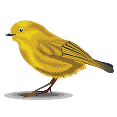 Warbler bird isolated on a white background. Realistic illustration.